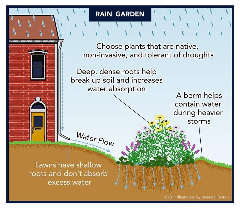 Plant A Rain Garden Partnership For The Delaware Estuary