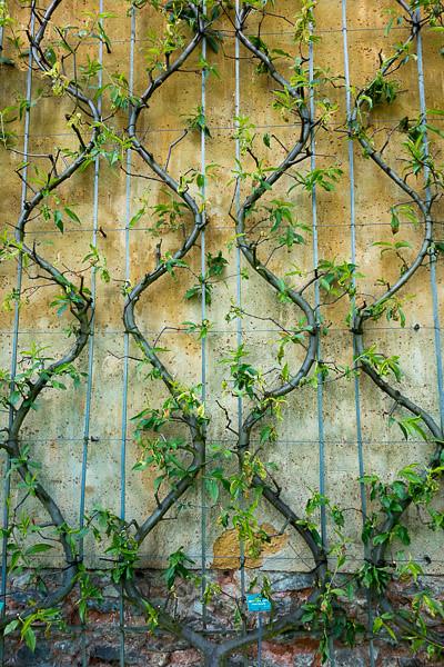 potager du roi versailles flickr photo sharing. Black Bedroom Furniture Sets. Home Design Ideas