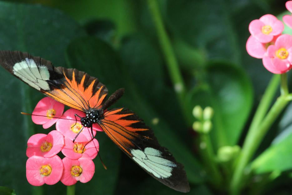 091014_01_butterfly14