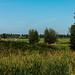Holland - seemingly endless summer . .