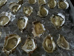 Hope Ranch oysters from Open Ocean Shellfish