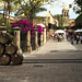 Small photo of Streets of Tequila