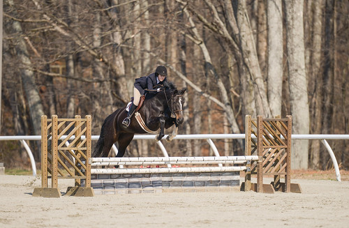 sports animal animals jumping tina equine equitation sweetbriarcollege madelinecoleman