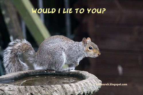 Squirrel Tale 2.jpg