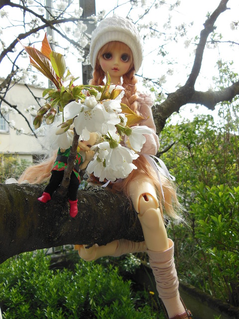 [Toulouse] Résine et fleurs de cerisier 8629638806_4b926877ca_z