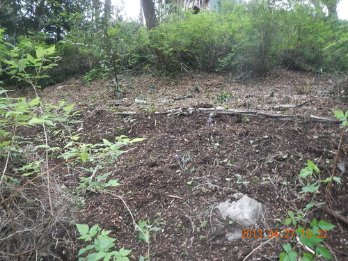 Fully Mulched Hill