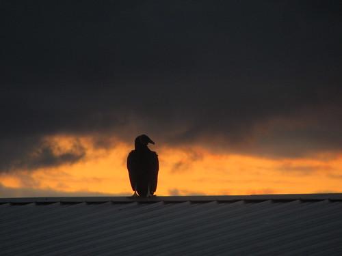 sunrise florida stuart buzzard tinroof stlucielockdam