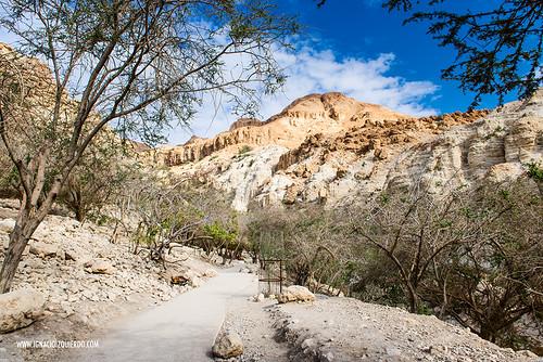 Israel - Ein Gedi Natural Park 01