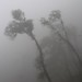 Trees in the fog - Árboles en la neblina; camino entre San Pedro Ocotepec y San Lucas Camotlán, Región Mixes, Oaxaca, Mexico por Lon&Queta