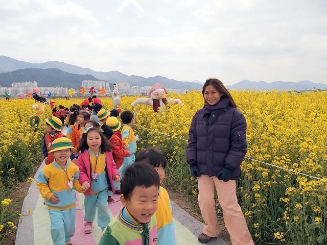 rebecca - rapeseed canola flower festival busan