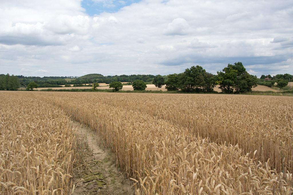 Near Leeds Castle Hollingbourne Circular via Hucking