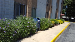 7801 Old Branch Exterior Landscaping