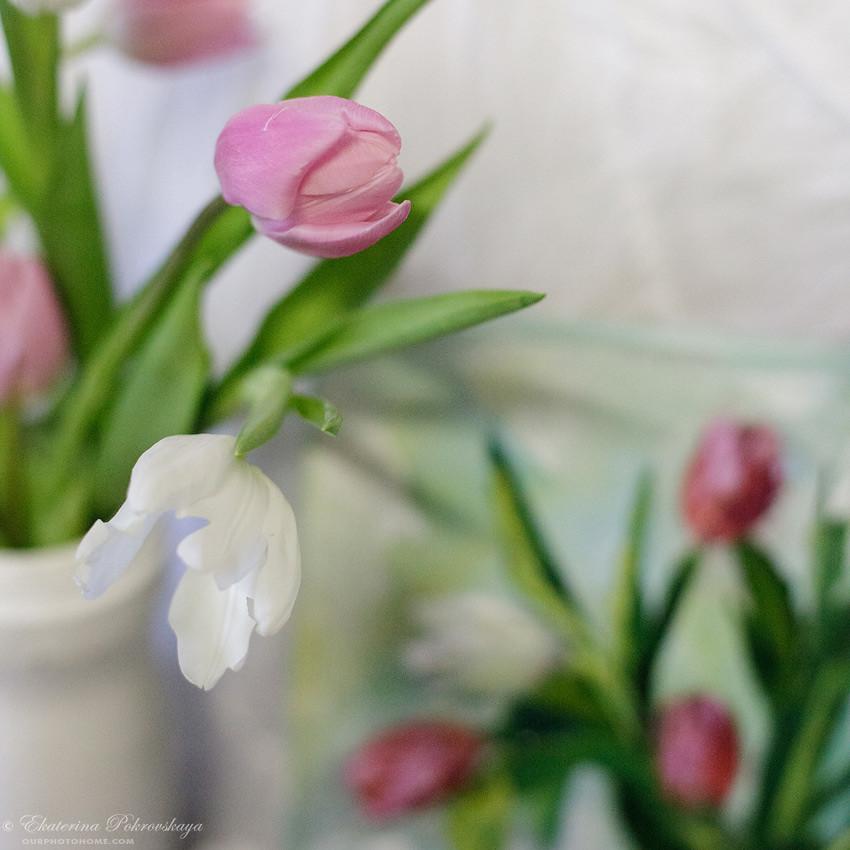 tulip_draw_09