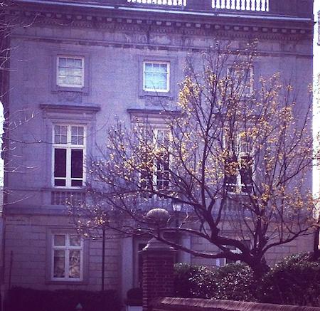 Yellow Tree in Philadelphia