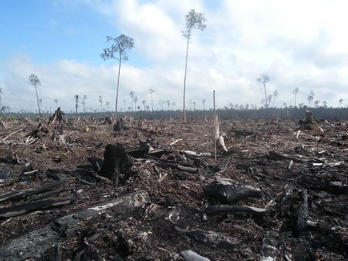 【紐約氣候峰會】跨國企業提承諾 20年內守住天然林
