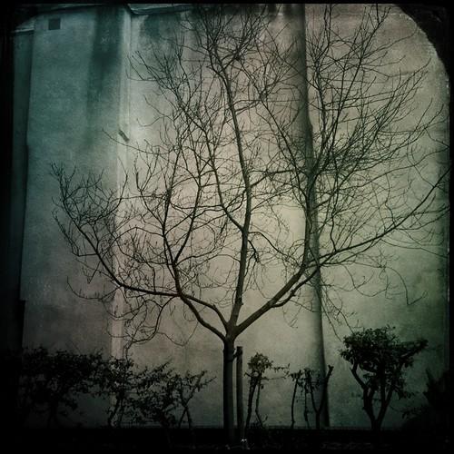 Tree vs. The City