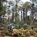 Huerto del Cura, Garden in Elche