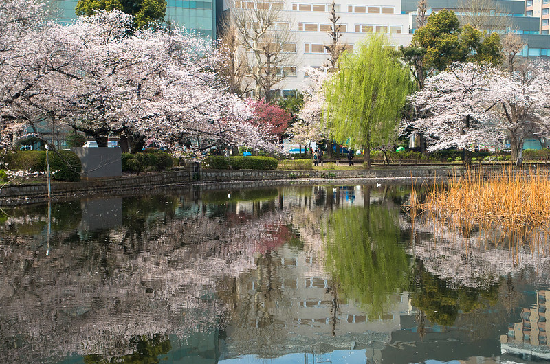 A beautiful reflection off Shinobazu Pond in Ueno Park