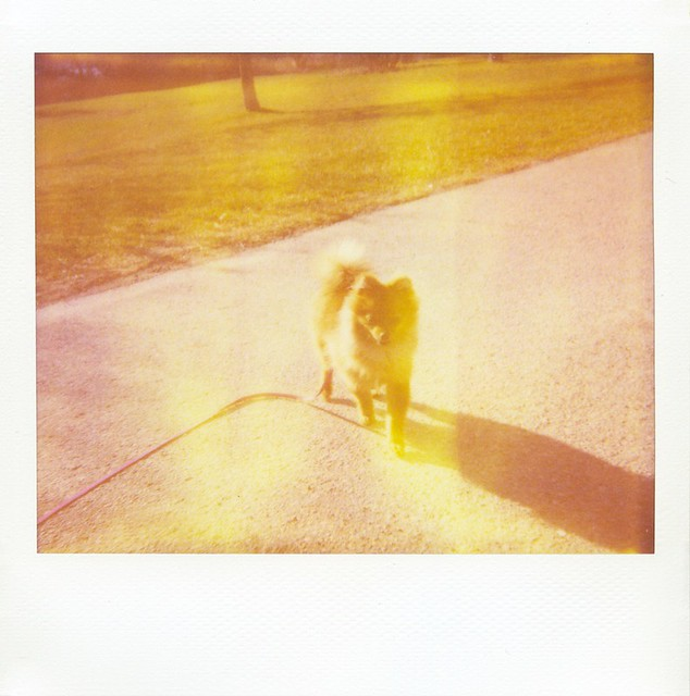 polaroid - Miss Fluffington