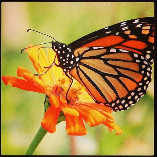 Butterfly San Diego Orange County Riverside Flickr