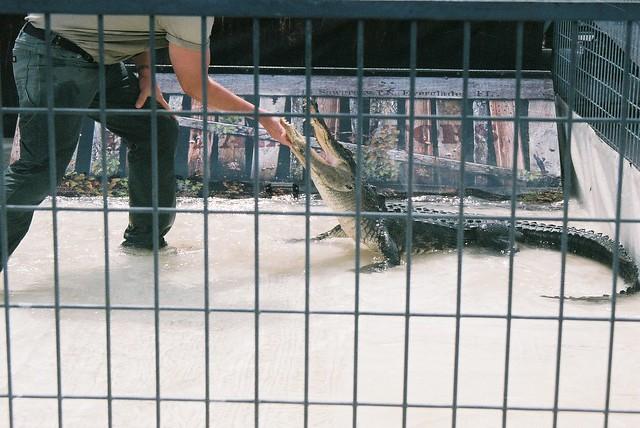 Gator Guys