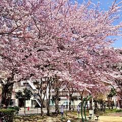 新寺五丁目公園
