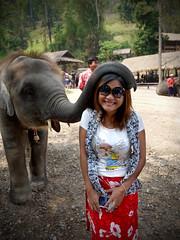 Maesa Elephant Camp, Chiang Mai