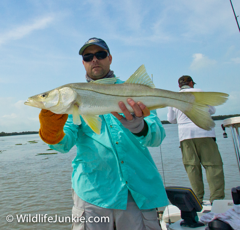 Slot Snook in the Everglades