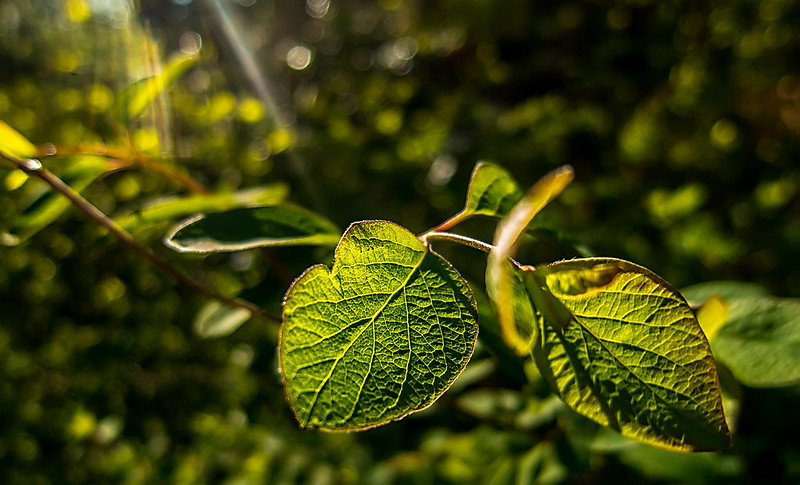 leaves and light1