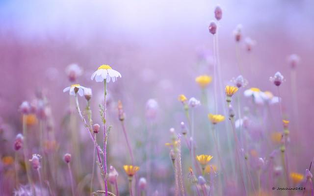 El bosque de las flores