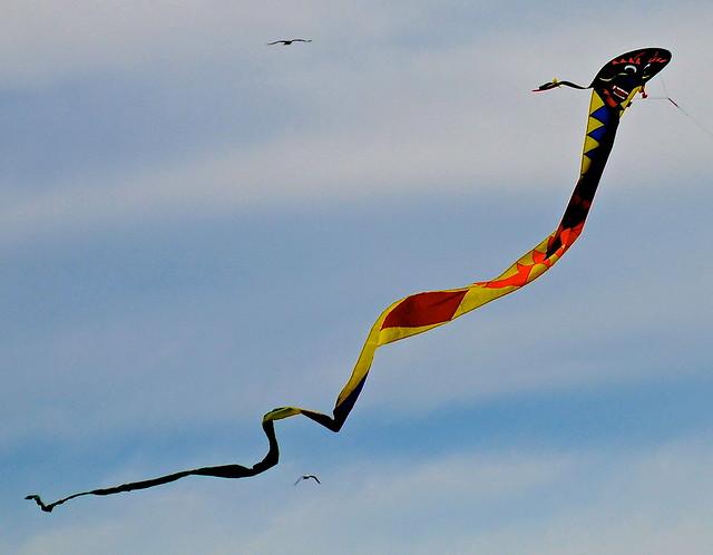 Kite at Indiana Dunes