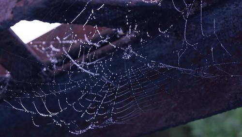 Spider web & rust