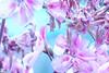 Flowery Rain
