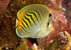 Suva Scuba Dive Club