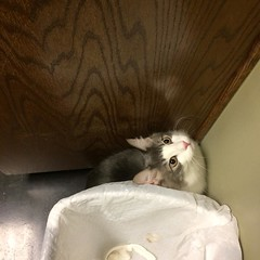 Earlier today, Mongo tried to hide in the exam room during his visit to the vet.