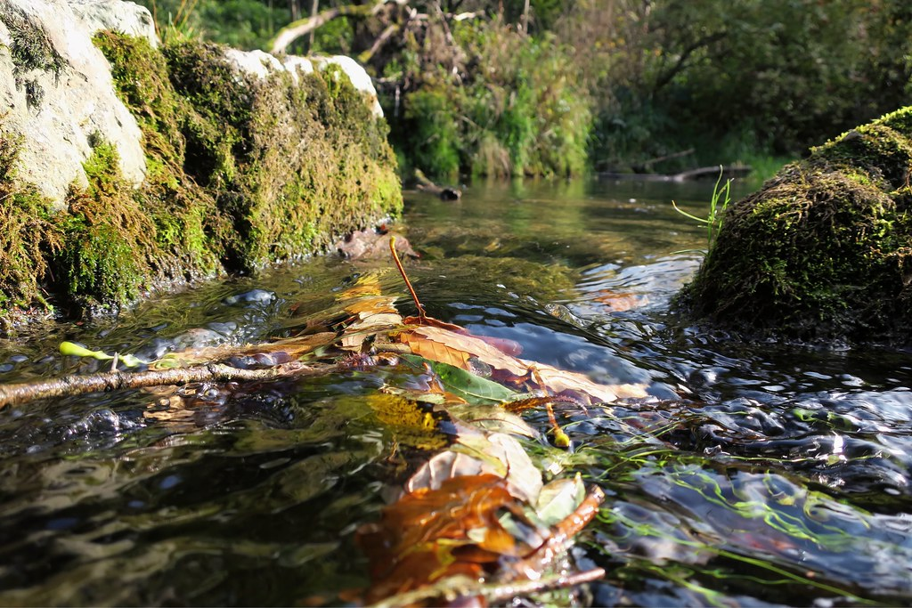 Autumnal River Flow