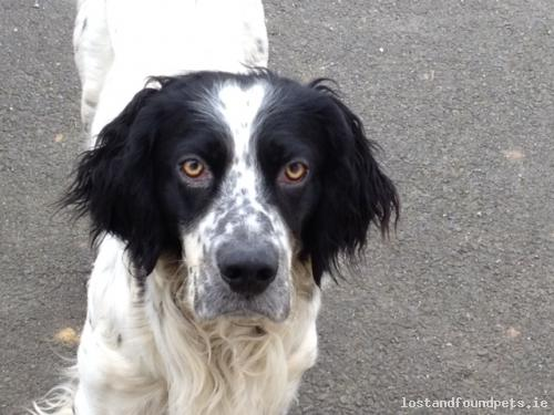 [See Comments Below] Tue, Jun 4th, 2013 Lost Male Dog - Railway, Streamstown, Westmeath