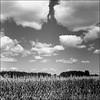York Durham Line Corn Field With Sky