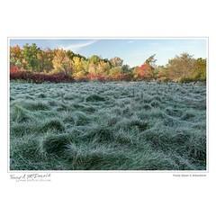 Frosty Dawn II, Arboretum