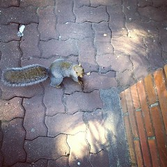 Squirrel in the Company's Garden, Cape Town