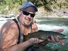 Sweet McCloud River pocket water Brown Trout and happy fly fisher!