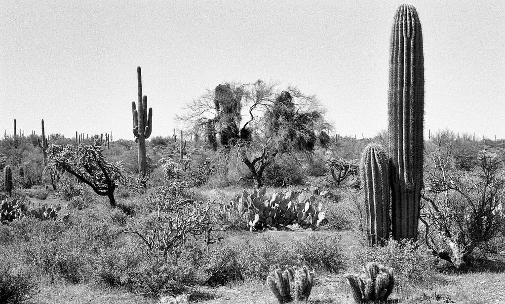 Whitlow Ranch Dam Arizona Around Guides