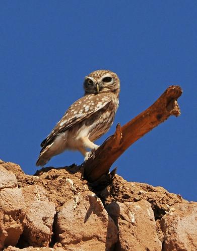 sahara egypte oiseaux elkhargha villageislamique