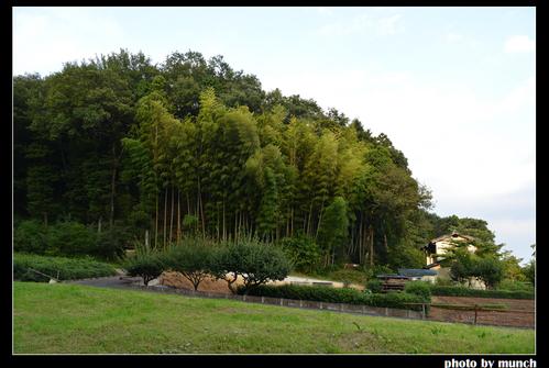 經過農地之後就是龍貓森林!圖片來源:munch