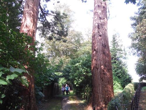 Path between High Trees, Lilies, Weedon