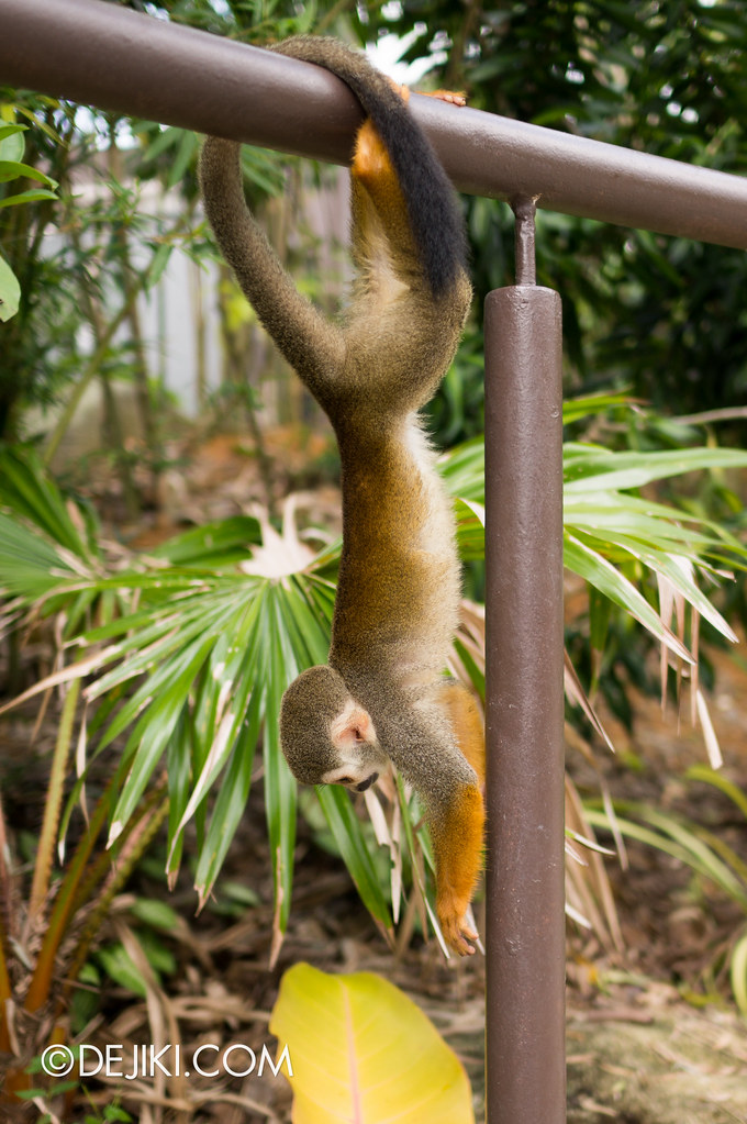 River Safari - Squirrel Monkey 2