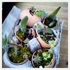 succulent six pack