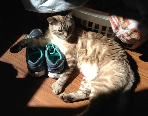 Livvy on sneakers