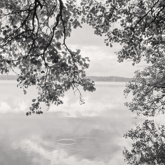 LAKE | LEAVES Study