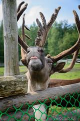 Deers16 (5 of 13).jpg